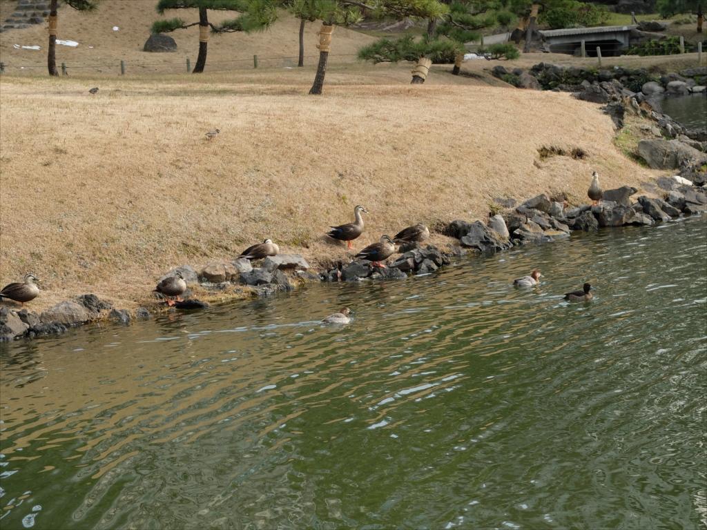 池の畔に並べられた石