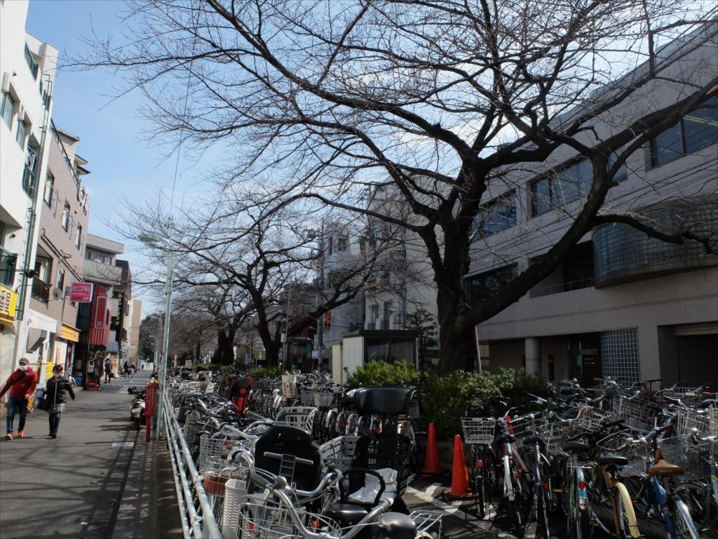 都立大学駅前近くの桜はまだまだ咲かない様子