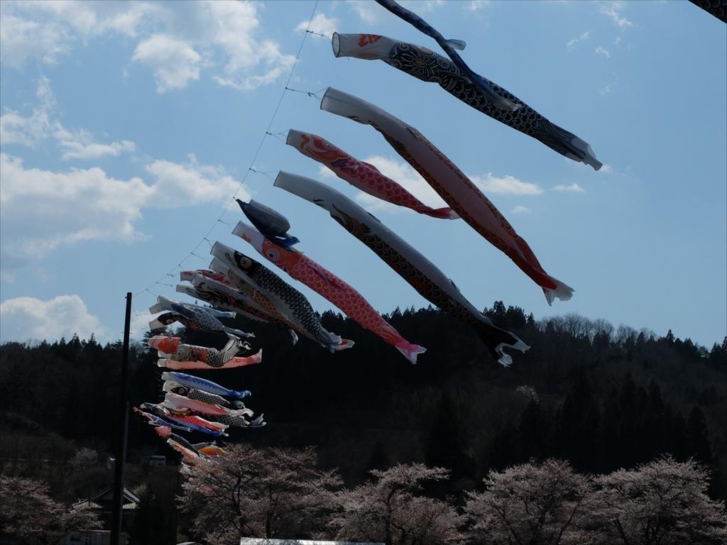 夏井千本桜_2