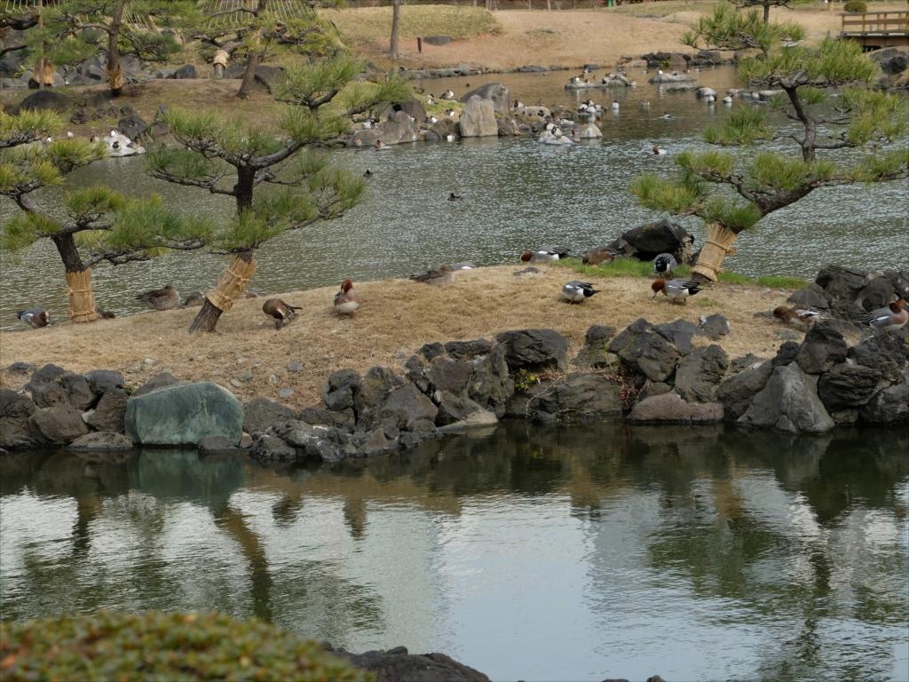 鳥さんたちはのんびり寛いでいた