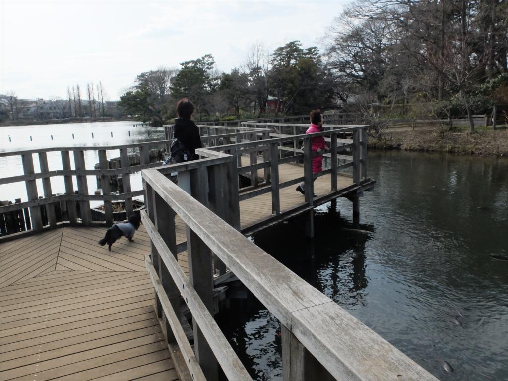 木橋を歩きながら_1