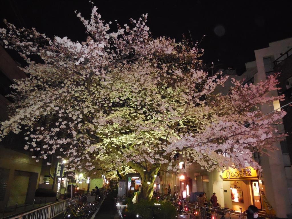 夜間の桜_COOLPIX S6500_2