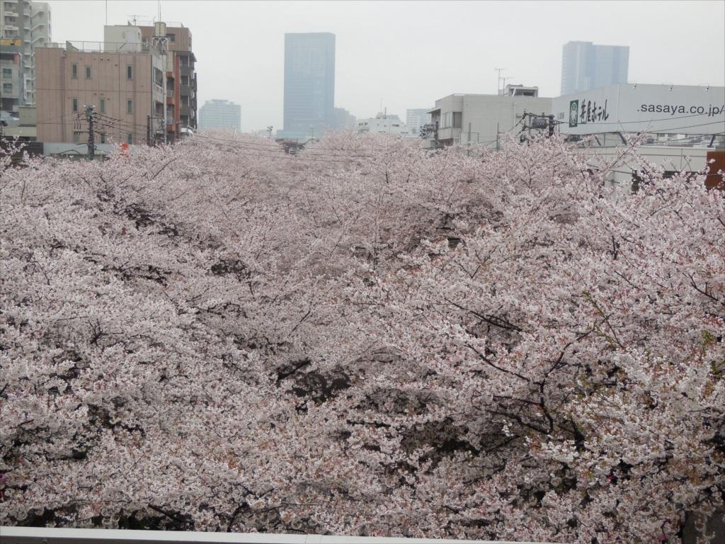 中目黒駅のホーム代官山駅寄りの位置から上流側_1