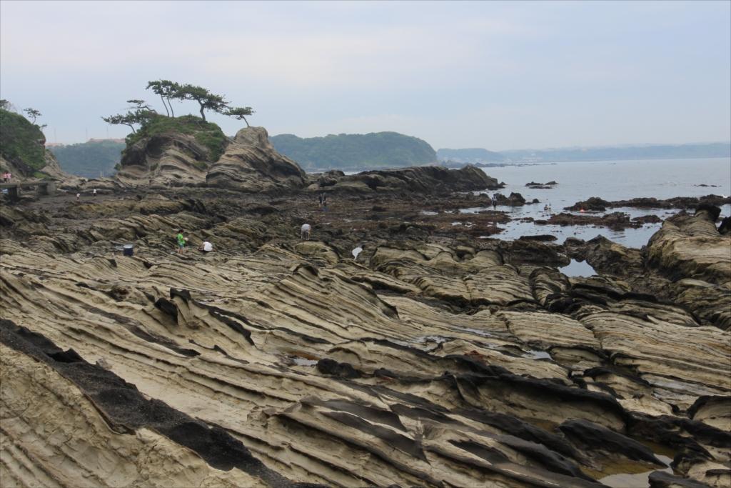 見事な海蝕台_1