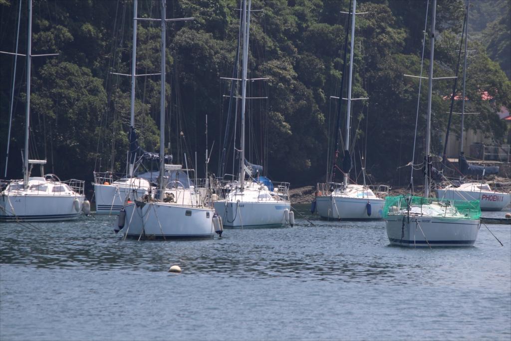 小網代湾内にも、係留してあるヨットがたくさん