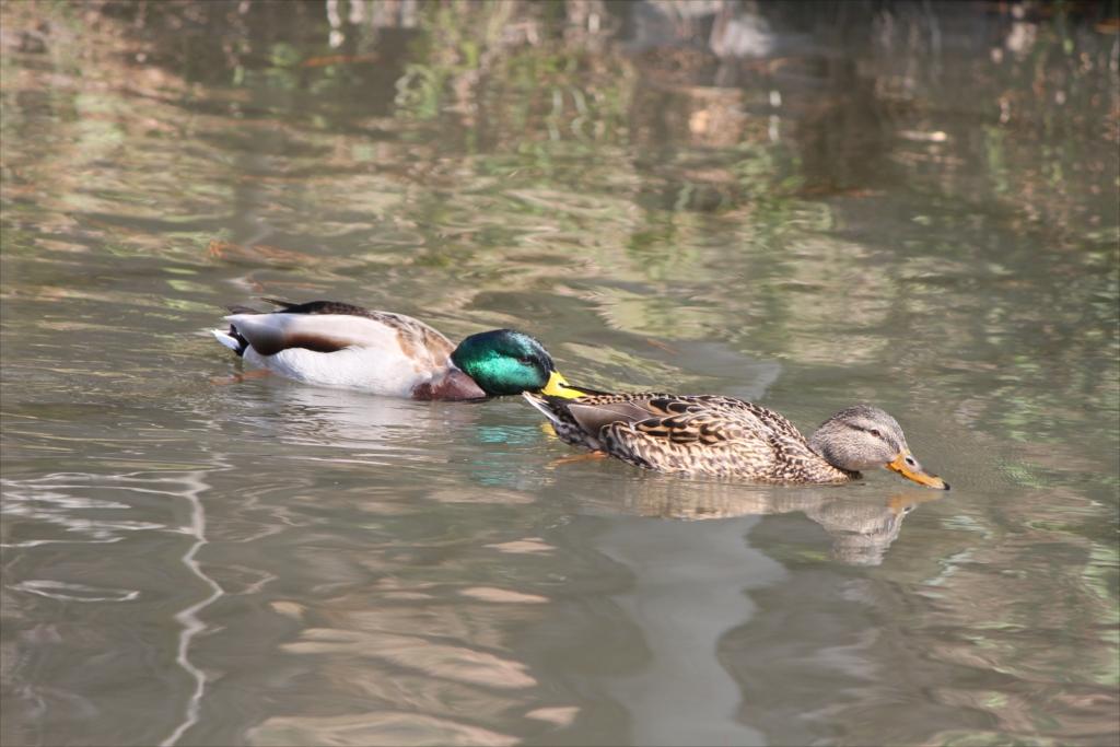 宝来公園の池_10