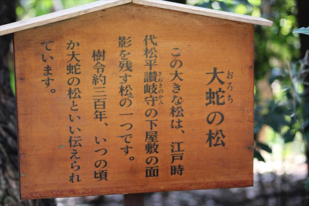おろちの松_2
