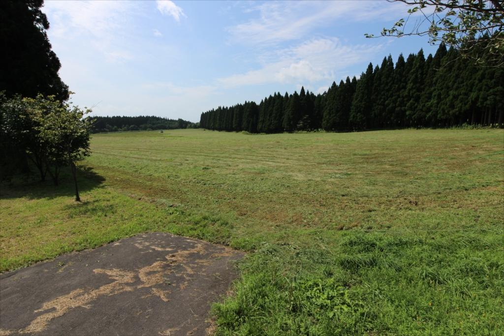 すぐ前の牧草地