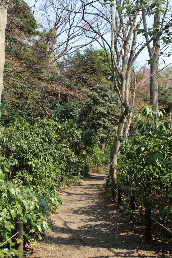 湿地に沿って迂回して武蔵野植物園に向かう_1