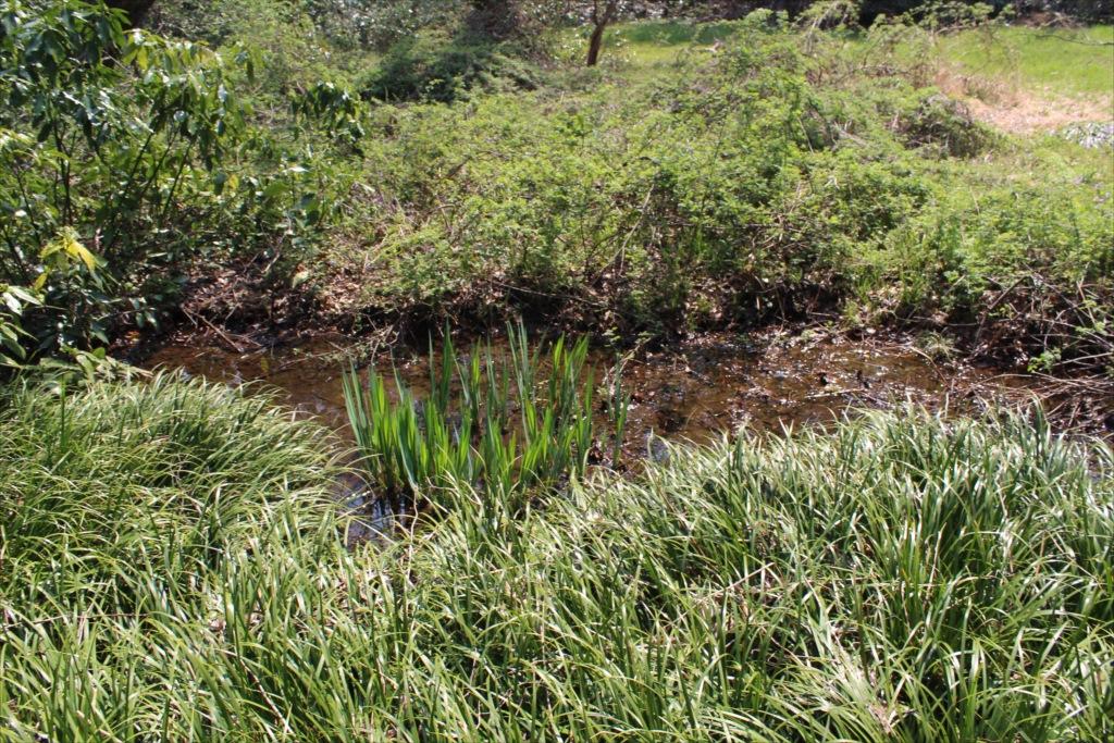小川と湿地_2