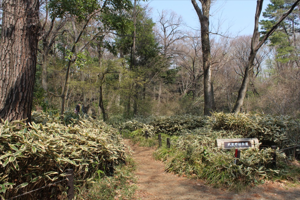 武蔵野植物園に着いた