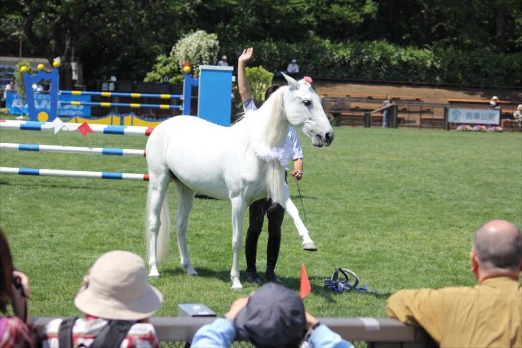 馬の挨拶_1