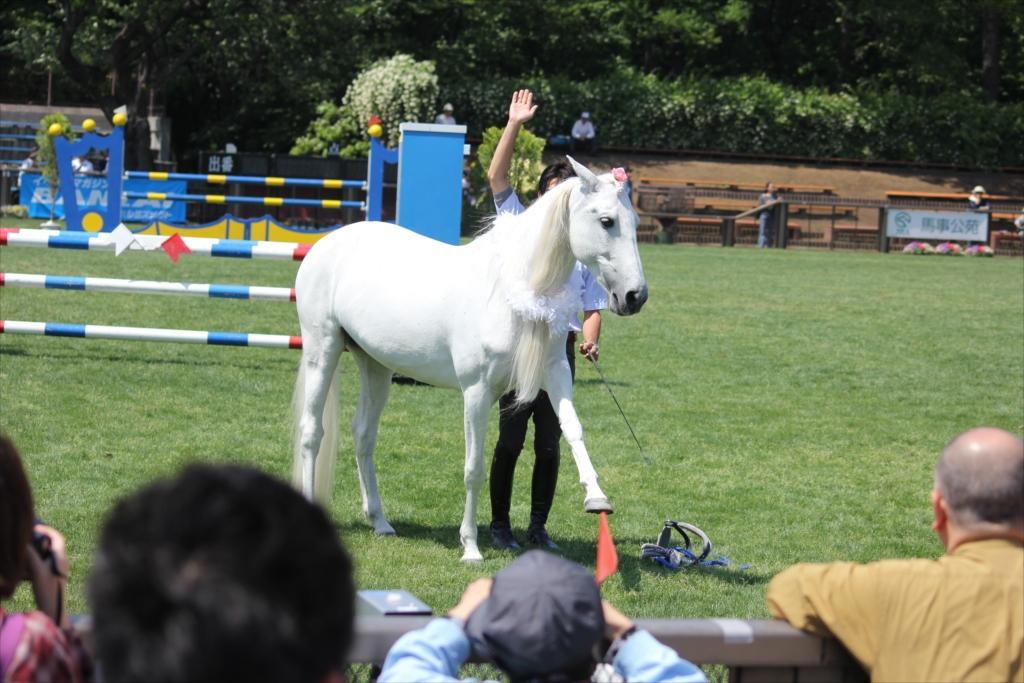 馬の挨拶_4