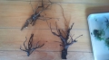 流木で樹木 (1)