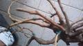 流木で樹木 (3)