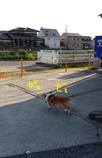20140315-4.jpg