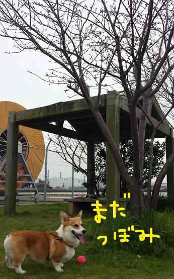 20140331-18.jpg