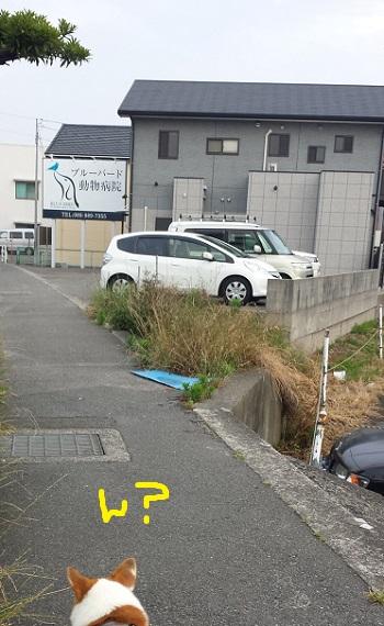 20140611-3.jpg