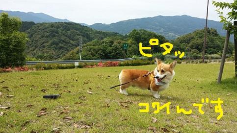 20140615-9.jpg