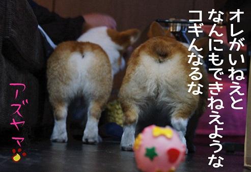 20140807-7.jpg