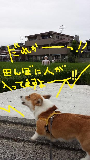 20140904-3.jpg