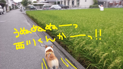 20140904-4.jpg