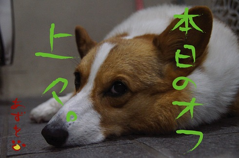 20140908-6.jpg
