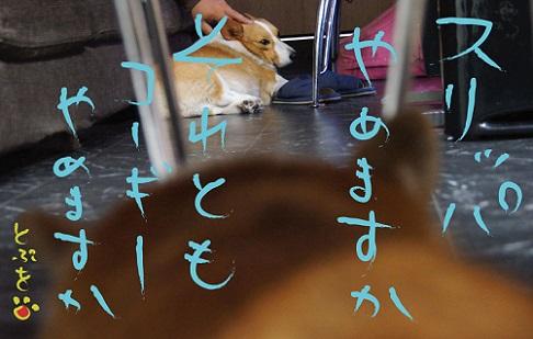 20140910-14.jpg