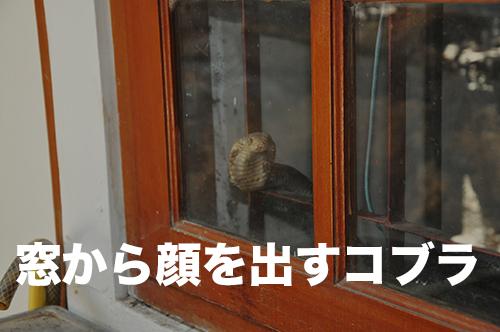 kobura-27-003.jpg