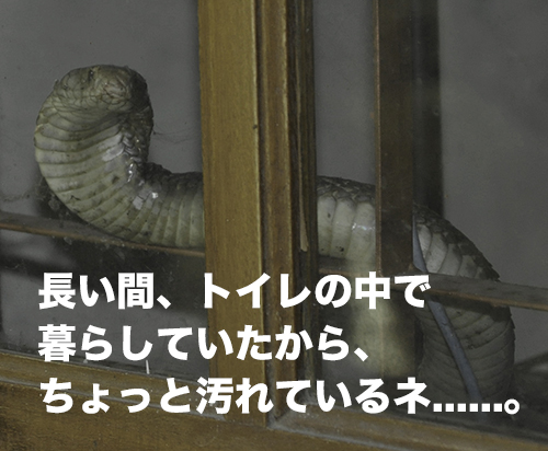 kobura-29-010.jpg