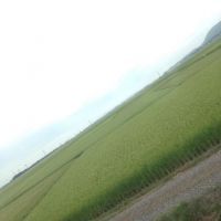 yahikosen_hukei.jpg