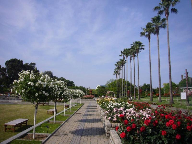 長居植物園 バラ園