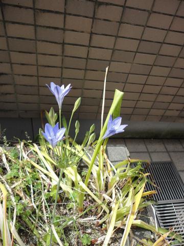 出先の花壇の新顔さん