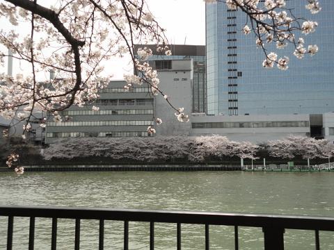 天満橋から銀橋への川端④
