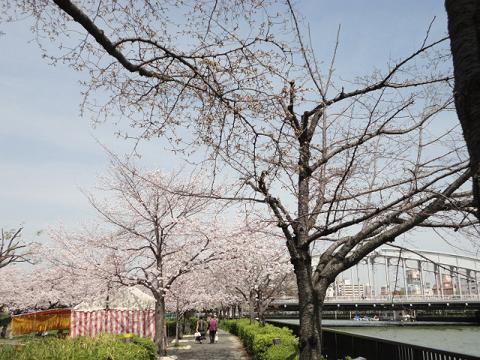 天満橋から銀橋への川端⑬