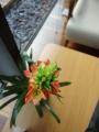 出先のテーブルの上の花の名は?②