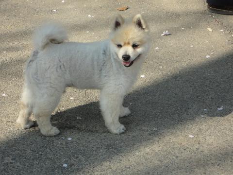 初めて見かけた野良犬???
