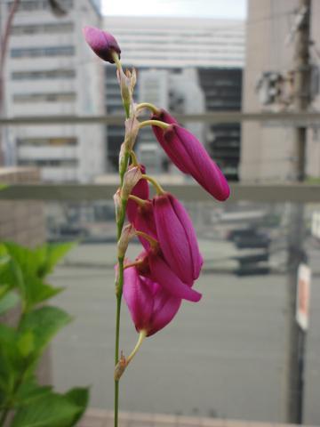 また変わった花が