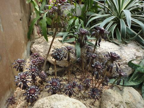 天王寺公園の温室で少し⑥