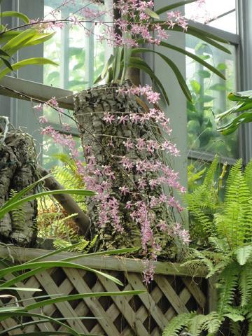 天王寺公園の温室で少し⑧