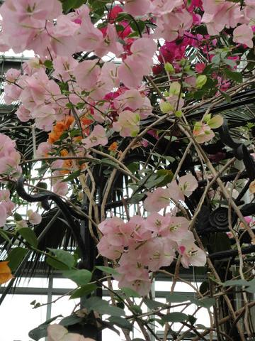天王寺公園の温室で少し⑩