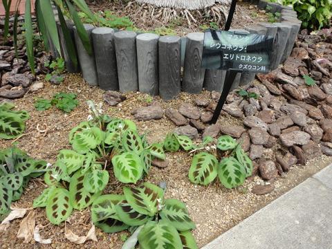 天王寺公園の温室で少し⑪