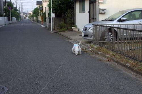 asaichikarasigotonikagitteyo3.jpg