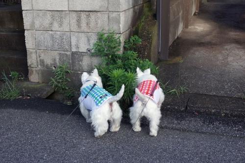 futaritomoguzuguzudesa3.jpg
