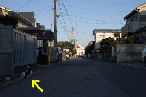 gotabunnimorezukaidame1.jpg