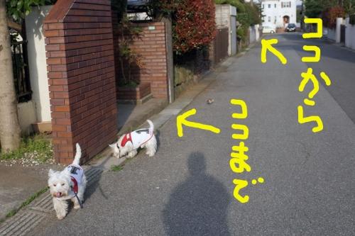 hanachirasinohanninhasuzume1.jpg