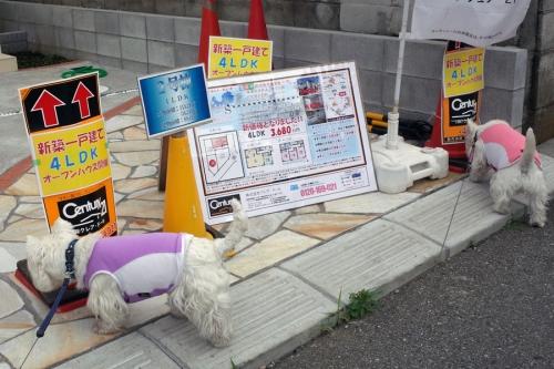 koryamazuidesyoga4.jpg