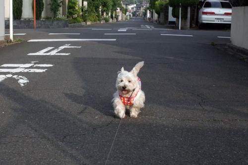 kotosinoajisaihairoganuketeru5.jpg