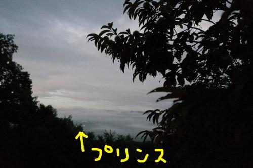 mouretunakusahaminoasa1.jpg