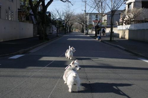 sakurahamadakaina1.jpg